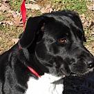 Adopt A Pet :: Cersei(12/12) New Pics & Video