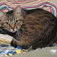 Adopt A Pet :: Rocky - Jackson, MI