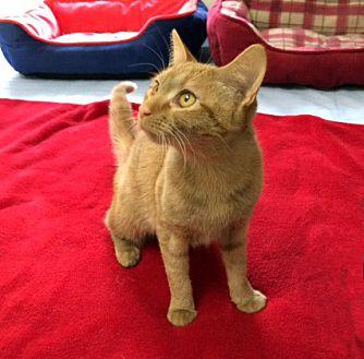 Adopt A Pet :: Isabella  - Concord, NC