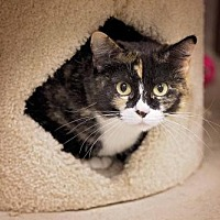 Adopt A Pet :: Trixy - Pryor, OK