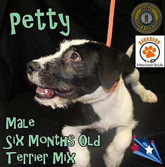 Adopt A Pet :: Petty  - Nicholasville, KY