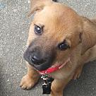 Adopt A Pet :: Porg
