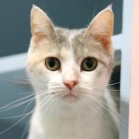 Adopt A Pet :: Kloey - Charleston, SC