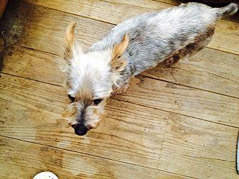 Adopt A Pet :: DIXON  - Oakland, CA