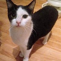 Adopt A Pet :: Rachel - Chattanooga, TN