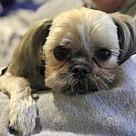 Adopt A Pet :: Bodhi