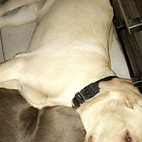 Adopt A Pet :: Duke - Keyport, NJ