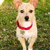 Adopt A Pet :: Oso - Marina del Rey, CA