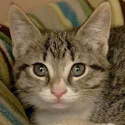 Available pets at Lollypop Farm, the Humane Society of