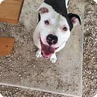 Adopt A Pet :: Darwin - Leander, TX