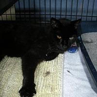 Adopt A Pet :: Hallie - Washington, VA