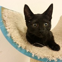 Adopt A Pet :: Lovey - Milwaukee, WI