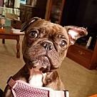 Adopt A Pet :: Lucy Mae