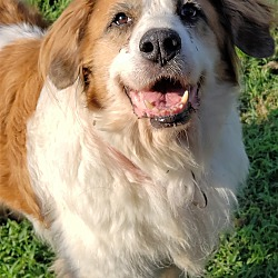 Available pets at Urgent Animals of Fort Worth, Inc in Haslet, Texas