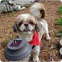 Adopted pets at Shih Tzu and Furbaby Rescue OHIO in Dayton, Ohio