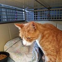 Adopt A Pet :: Delaney - Hartford City, IN