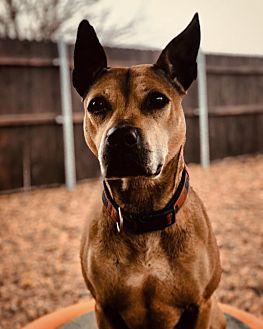 Adopt A Pet :: Keira  - Oklahoma City, OK