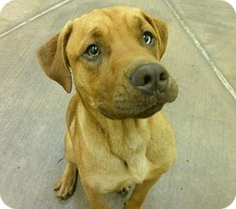 Retriever (Unknown Type) Mix Dog for adoption in Parma, Ohio - TD
