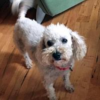 Adopt A Pet :: Cassie - Atlanta, GA