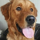 Adopt A Pet :: Boone