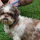 Adopt A Pet :: More Bella Rose