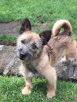 Adopt A Pet :: Rowland  - Renton, WA