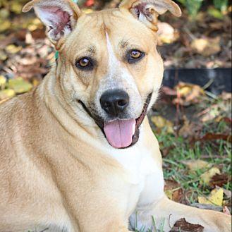 Dog Adoption Fayetteville Nc