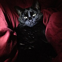 Adopt A Pet :: Kiki (COURTESY POST) - Baltimore, MD