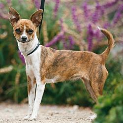 The Craigslist Monterey Pets For Sale {Forum Aden}