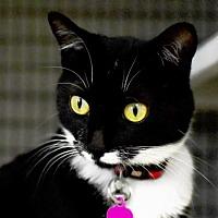 Adopt A Pet :: Catalina - Denver, CO