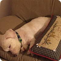 Adopt A Pet :: Rosabelle - Madison, WI