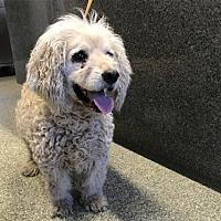 Adopt A Pet :: I1301070 - Pomona, CA