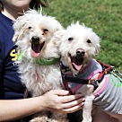 Adopt A Pet :: Pooch and Mookie