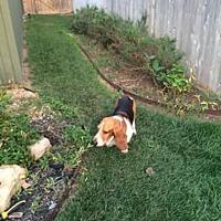 Adopt A Pet :: Fred A - Albuquerque, NM