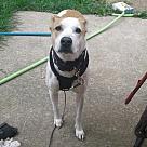 Adopt A Pet :: Mogley