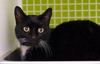 Adopt A Pet :: Hilly  - Troy, MI