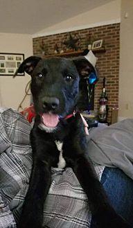 Adopt A Pet :: Pippen  - Clarksville, TN