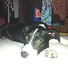 Adopt A Pet :: Barb of the BCs (Dymond)