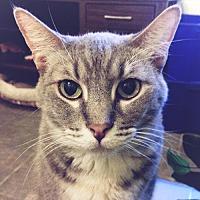 Adopt A Pet :: Revlon - Chino Hills, CA