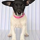 Adopt A Pet :: Brazil