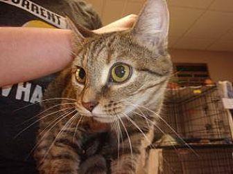 Adopt A Pet :: Ava  - Princeton, WV