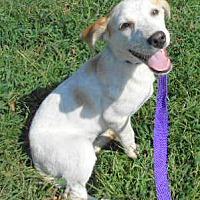 Adopt A Pet :: Suzanna - Allentown, NJ