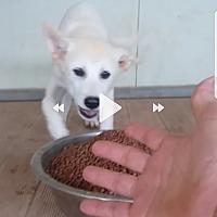 Adopt A Pet :: Neddy - Adoption pending - Oakton, VA