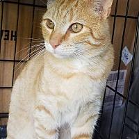 Adopt A Pet :: Simba - Fayette City, PA