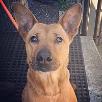 Adopt A Pet :: Paris - Seattle, WA