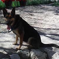 Adopt A Pet :: FARA - SAN ANTONIO, TX