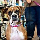 Adopt A Pet :: Alyssa *adoption pending*