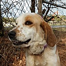 Adopt A Pet :: Dixie *Adopt or Foster*