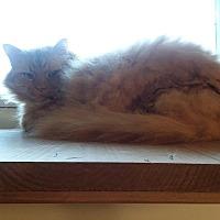 Adopt A Pet :: Dorsey (COURTESY POST) - Baltimore, MD