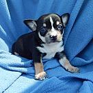 Adopt A Pet :: Noah (12 oz) Video